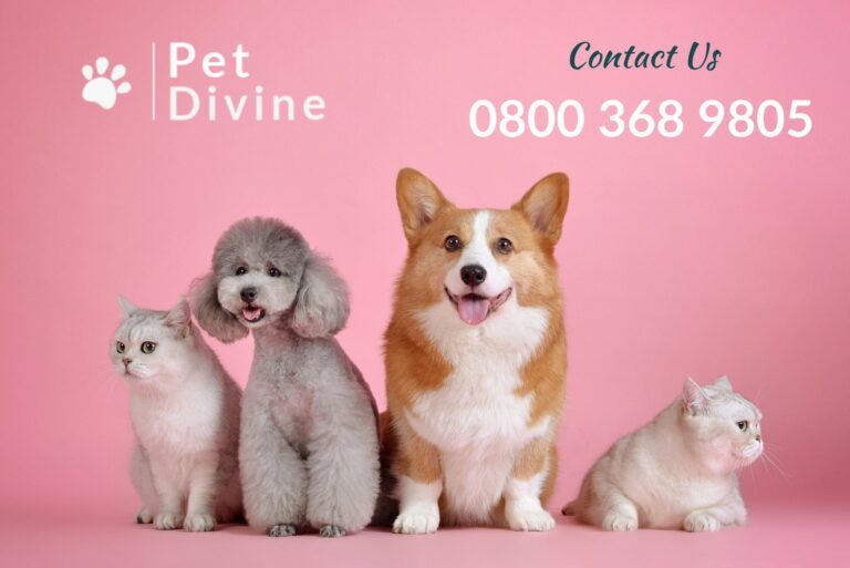 Pet Divine - Pet Cremation Services For Dogs, Cats and Small Pets